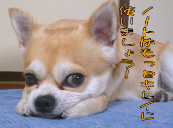 komusan_1101_005