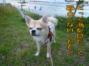 komusan_1105_004
