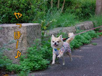 komusan_1105_006