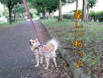 komusan_1105_007