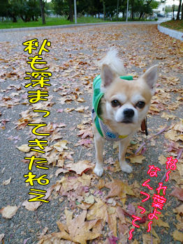 komusan_1120_003