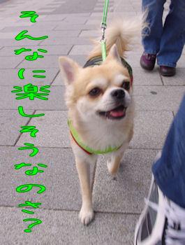 komusan_1128_006
