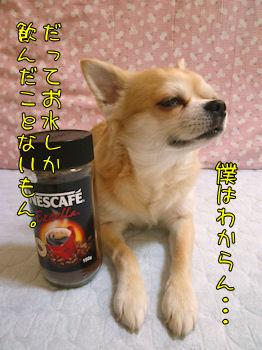 komusan_1206_002