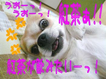 komusan_1206_007