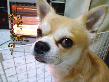 komusan_1214_001