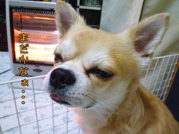 komusan_1214_002