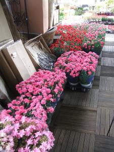 2012/05/09ブログ用 006
