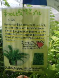 2012/07/09ブログ用 (4)