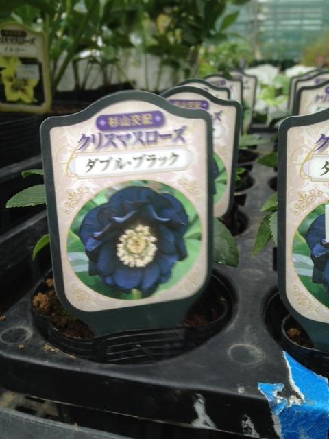 縺カ繧阪$121012・搾シ狙convert_20121017001300