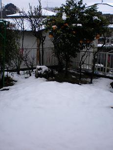 雪だぁ~~~(><)さぶ