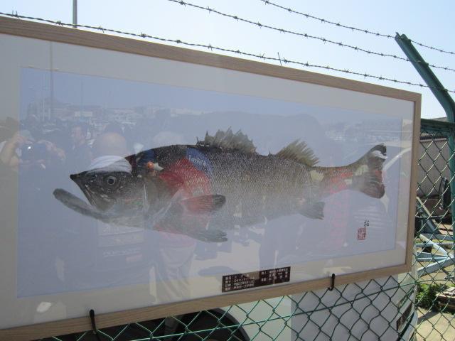 ハネ研の今中さんが釣られた94センチのスズキのカラー魚拓♪