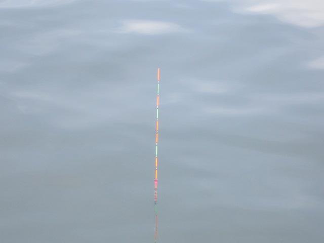 海抜36センチのトップ(*^_^*)