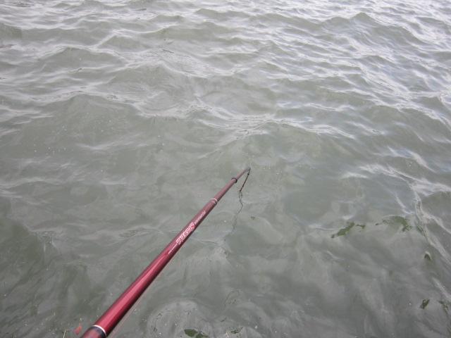 水中に突き刺さるハネハネ竿(*^_^*)