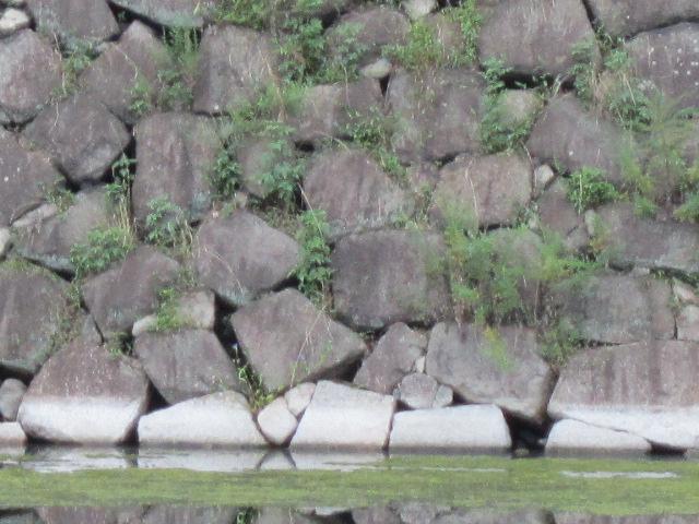 石垣のアップ(笑)