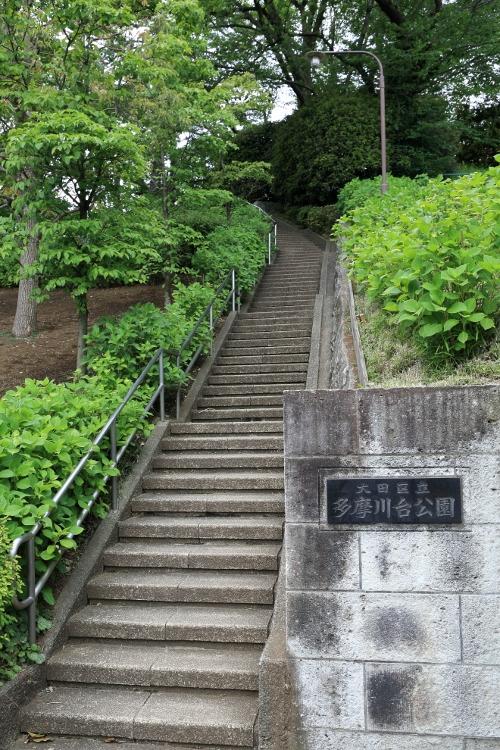 tamagawa_0007 f