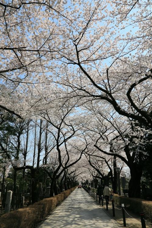 aoyama-b_0005f.jpg