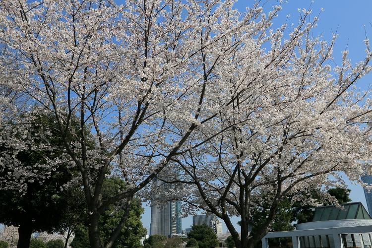 aoyama-b_0008f.jpg