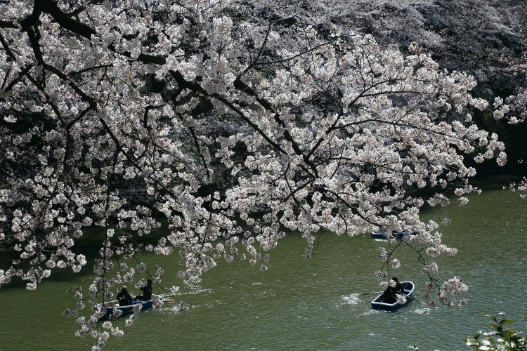 chidorigafuchi-s_0013f.jpg