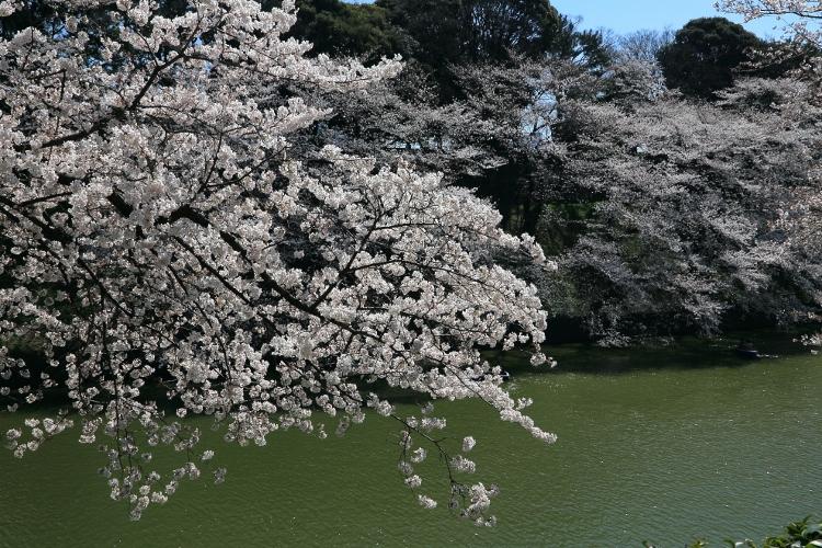 chidorigafuchi-s_0016f.jpg