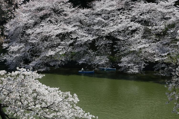 chidorigafuchi-s_0018f.jpg