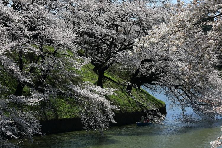chidorigafuchi-s_0028f.jpg