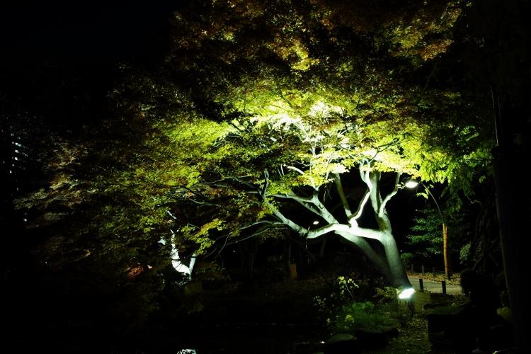 hibiya-p1207_0003f.jpg