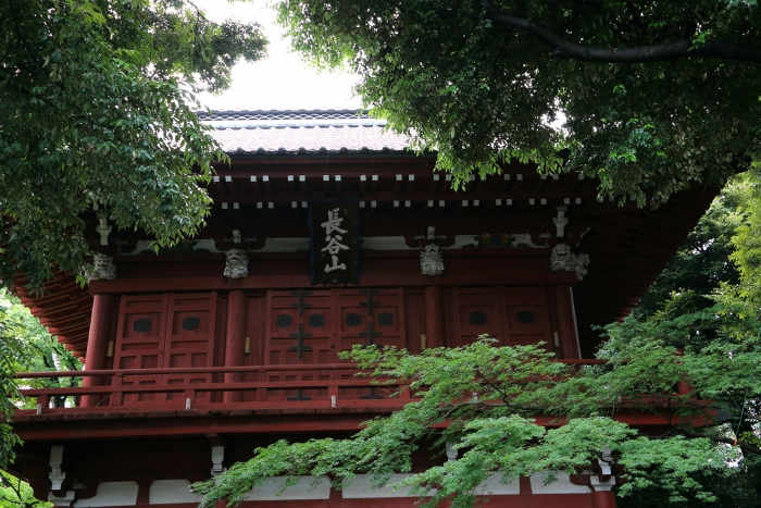 hondoji-ajisai617_0031f.jpg