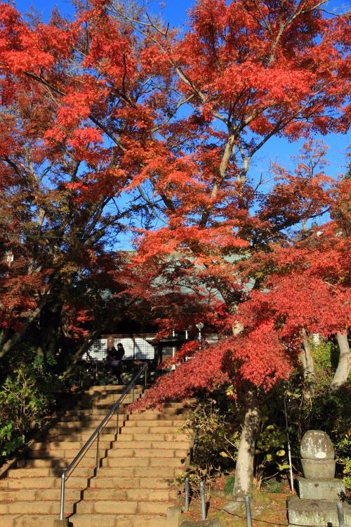 hondoji1202_0004f.jpg