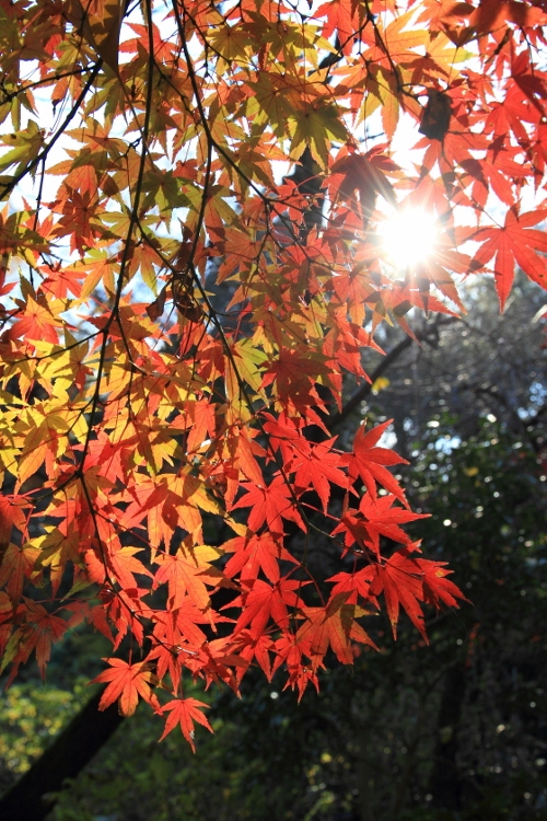 hondoji1202_0007f.jpg