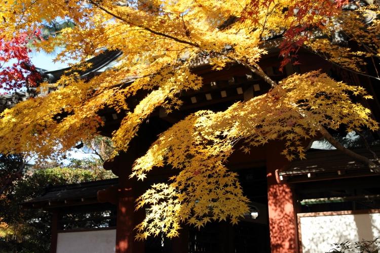 hondoji1202_0008f.jpg