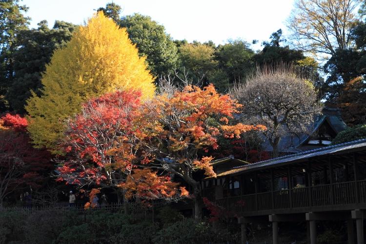 hondoji1202_0010f.jpg