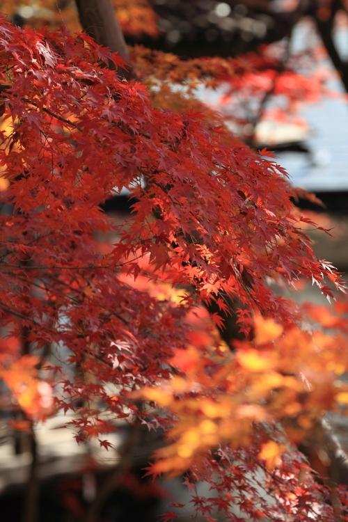 hondoji1202_0014f.jpg