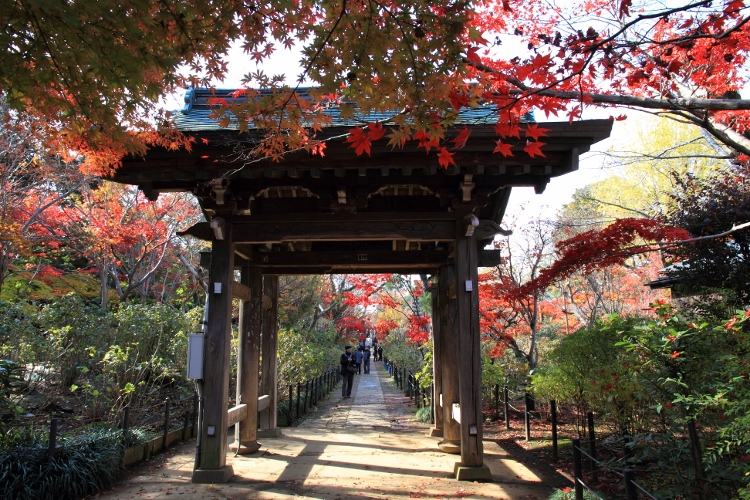 hondoji1202_0021f.jpg