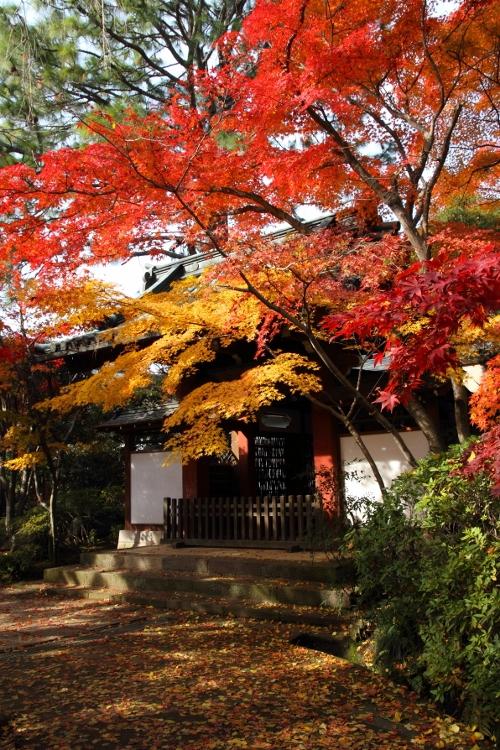 hondoji1202_0023f.jpg