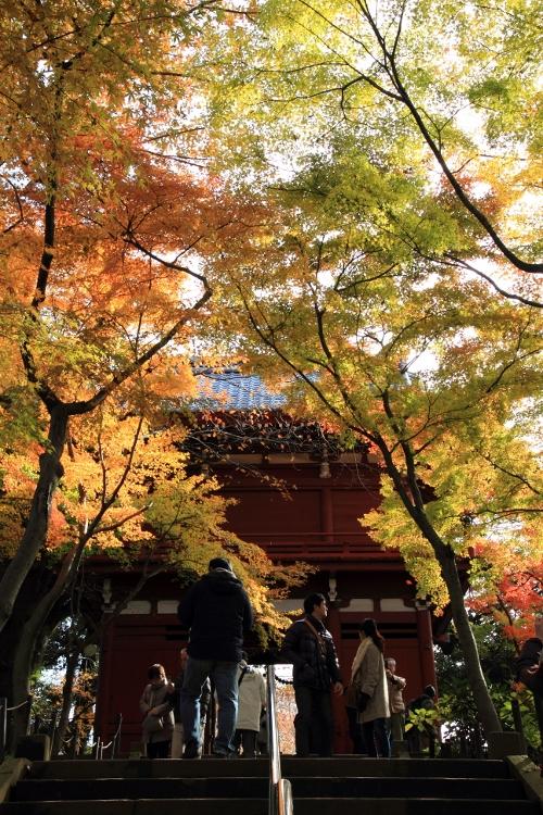 hondoji1202_0025f.jpg