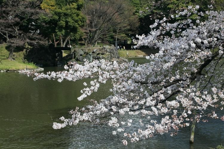 koishikawa-k_0002f.jpg