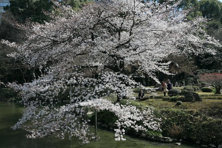 koishikawa-k_0006f.jpg