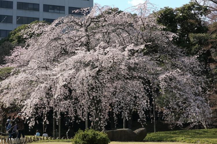 koishikawa-k_0009f.jpg