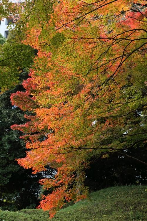 koishikawa1124_0002f.jpg