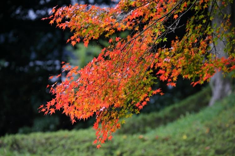 koishikawa1124_0003f.jpg