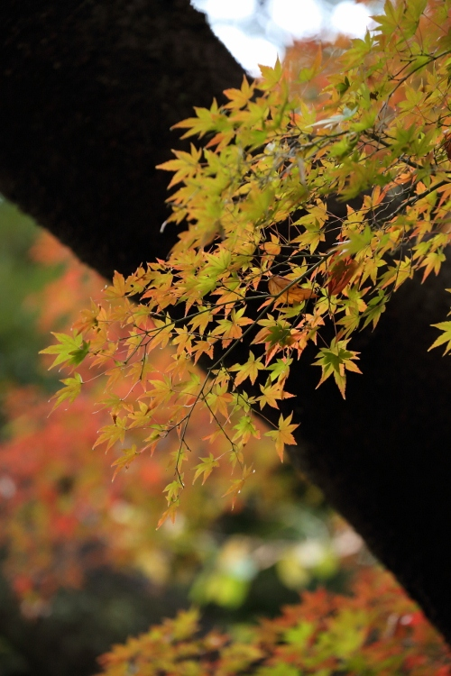 koishikawa1124_0004f.jpg