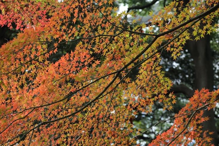 koishikawa1124_0005f.jpg