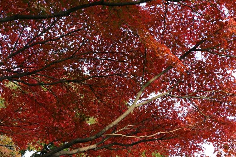 koishikawa1124_0006f.jpg