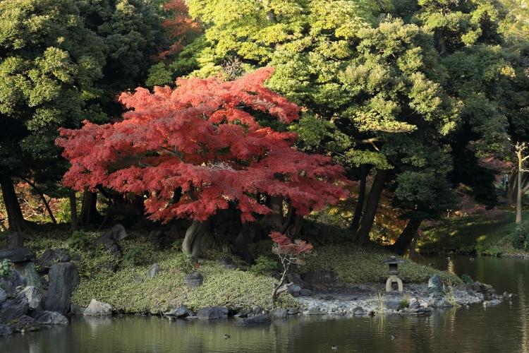 koishikawa1124_0021f.jpg