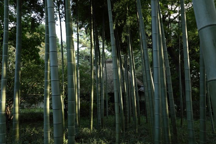 kugayama1020_0047f.jpg