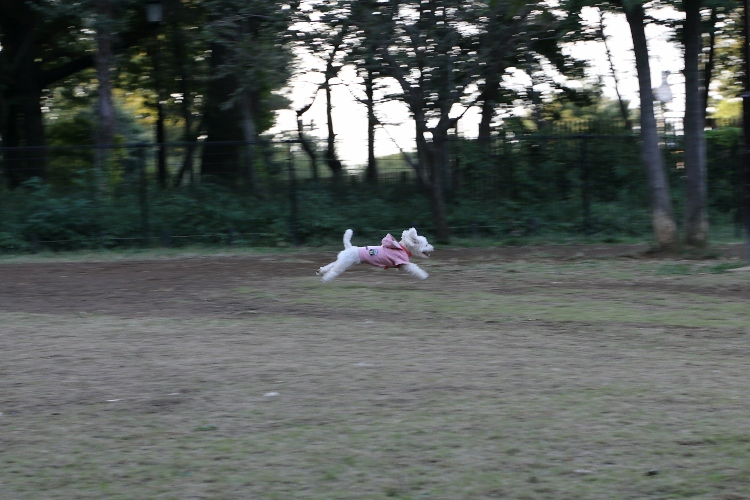kugayama1020_0052f.jpg