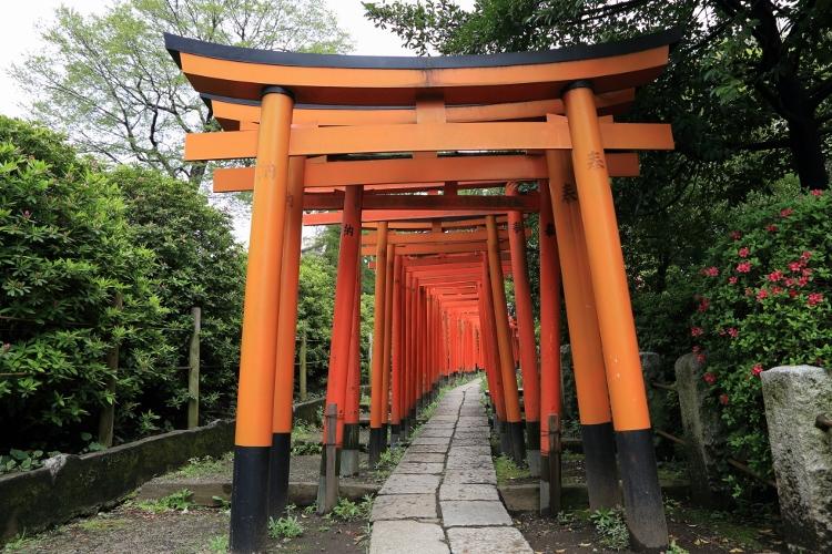 nezu-tsutsuji_0003f.jpg