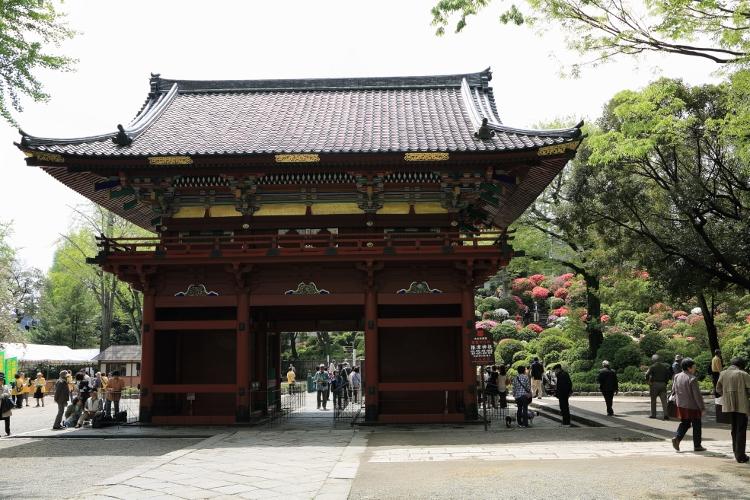 nezu-tsutsuji_0042f.jpg