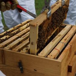 蜂蜜がたくさん!