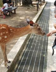 おとなしい鹿さん